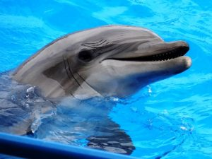 Photo of Варненският делфинариум